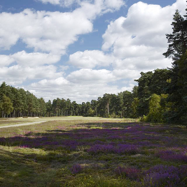 EB-126-05: Swinley Forest, 16th Hole