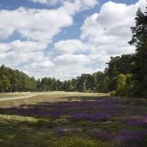 EB-126-05: Swinley Forest, 16th Hole