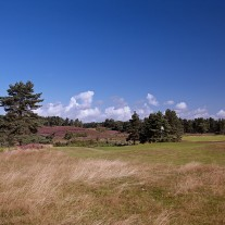 EB-118-09: Sunningdale New Course, 6th Hole