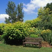 EES-37-01: Merriments Gardens, Hurst Green