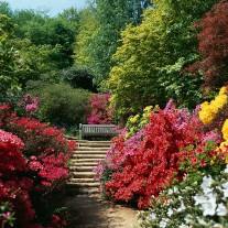 ES-226-03: Azaleas, Winkworth Arboretum, Godalming