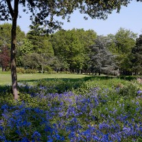ES-264-01: Bluebells, Burhill Old Course, 18th Hole