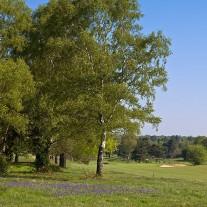 ES-266-10: Walton Heath New Course 5th Hole