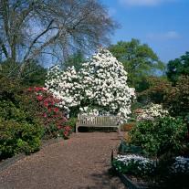 ES-73-05: Azaleas, RHS Gardens, Wisley
