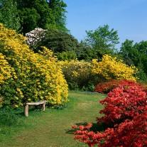 EWS-38-07: Azaleas, Leonardslee Gardens, Lower Beeding