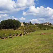 FL-117-05: Vineyard near Albas