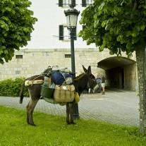 SN-07-04: Donkey & Pilgrims, Roncesvalles, Via Turonensis, Navarra, Spain